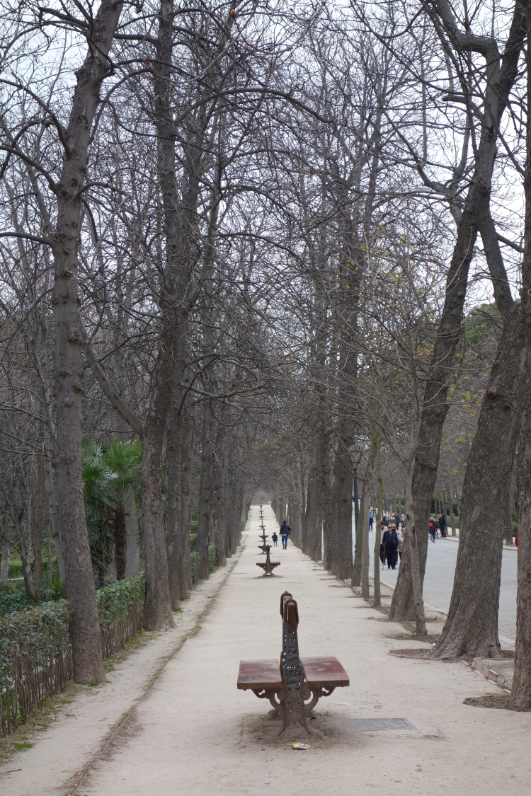 A long view of bark benches in Buen Retiro Park